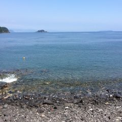 大瀬崎で体験ダイビングと川奈でファンダイビング