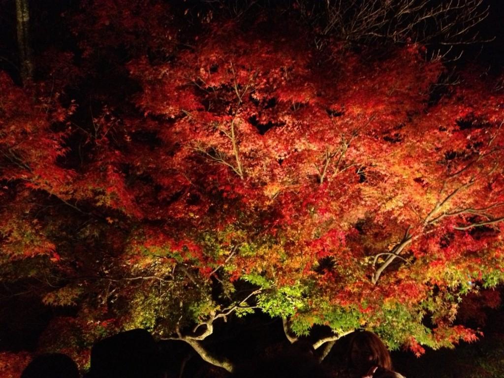 3連休で渋谷から車で宮島、京都、香川、鳥取砂丘を弾丸旅行