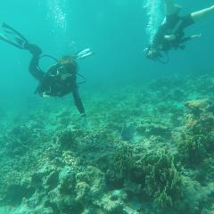 カンクンで体験ダイビング