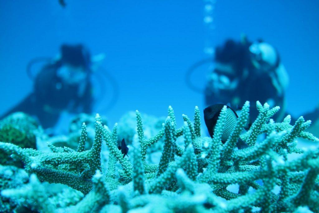沖縄ダイビング旅行 pert1 瀬底島 水納島