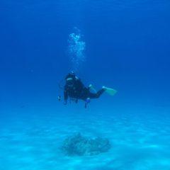 沖縄ダイビング旅行 pert2 慶良間諸島