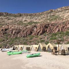 メキシコのラパスでアシカとダイビング キャンプ編