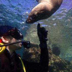 メキシコのラパスでアシカとダイビング ダイビング編 1日目