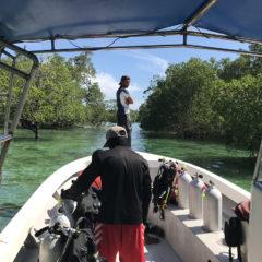 サママアイランドでマクロダイビングとマングローブ